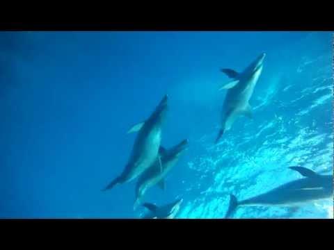 御蔵島ドルフィンスイム 110912  GoPro HD モノフィン 今日もいい天気!