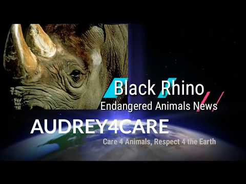 Black Rhinos    Endangered Animals   Best Environmental Science Learning Videos 4 Kids