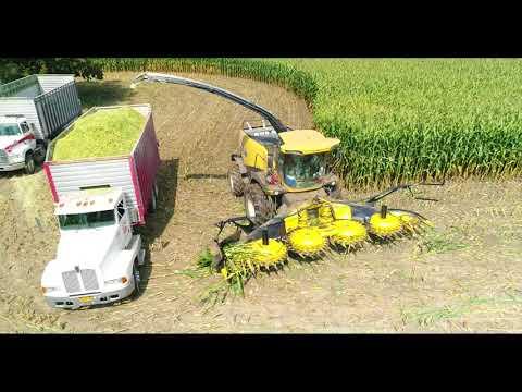 Bergen's chopping corn