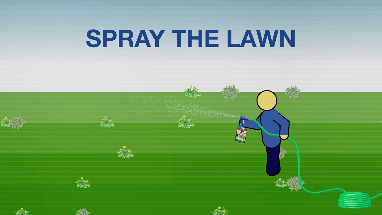 Season Long Weed Control For Lawns | Bioadvanced