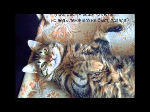 TopKot - смешные фотографии котов, кошек и котят