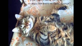 смешные фото кошек и котят.