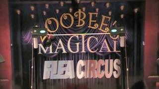 Flea circus with Zoobee