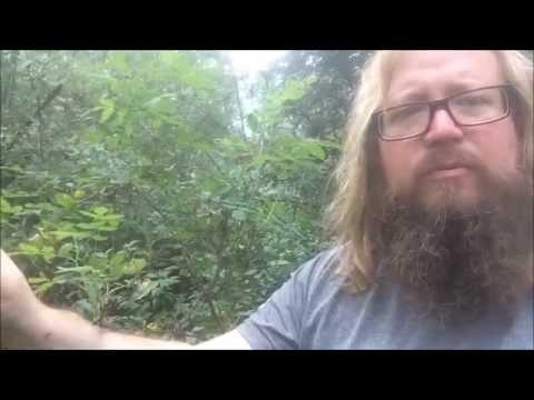Anglo Saxon Rune poem - Thorn