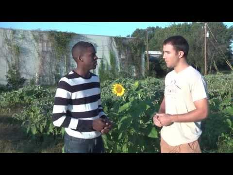 Understanding the organic food process