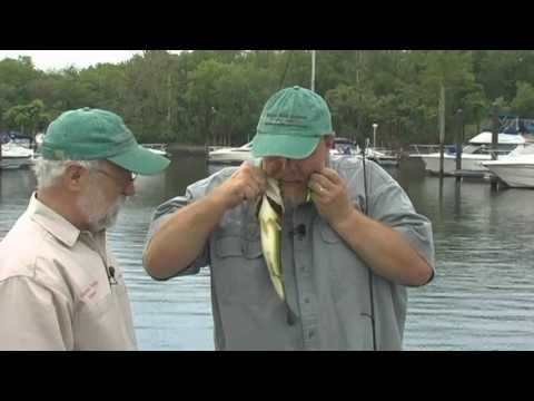 DVO 1303 Large Mouth Bass fishing on the Delaware River with Drop Shot Rig.