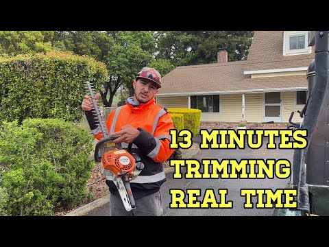 Hedge Trimming Action [ Stihl HS 45 ]