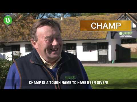 Nicky Henderson Stable Tour 2018/19 - Novice Hurdlers