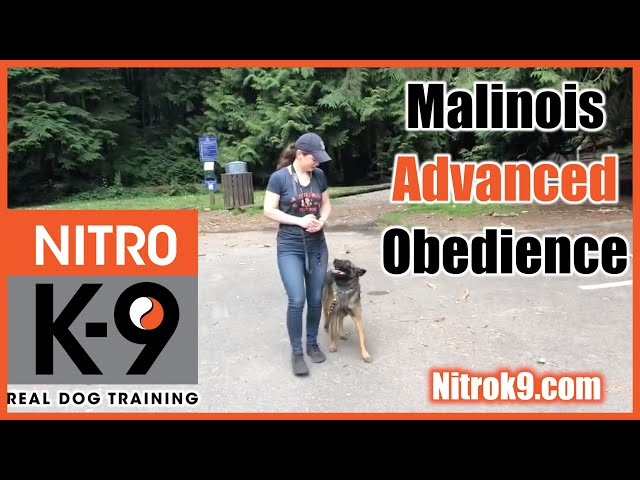 Dog Training — Advanced Obedience demo reel