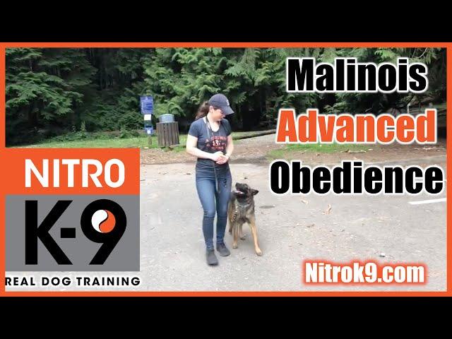 Dog Training — Advanced Obedience demo reel