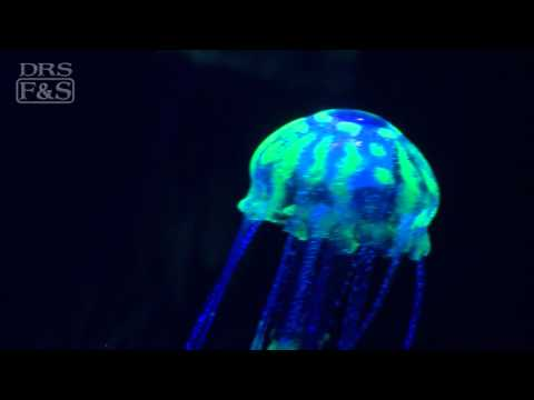 Eshopps Floating Jellyfish Aquarium Decoration | DrsFosterSmith.com