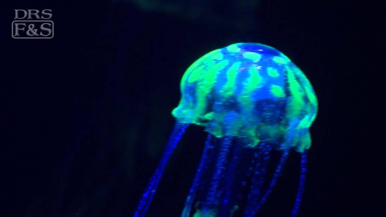 Eshopps Floating Jellyfish Aquarium Decoration Drsfostersmithcom