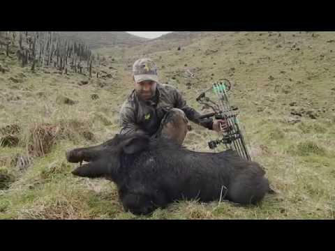 NZ Bow Hunting- Paddock Hunting 101
