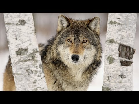 Дикий зверь в походе | Как понять зверя | Правила поведения в лесу