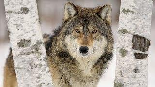 Фото Дикий зверь в походе Как понять зверя Правила поведения в лесу