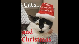 How to deal with Cat Holiday Stress