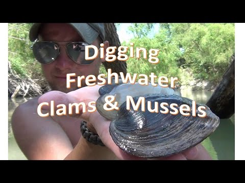 How To Find Freshwater Clams And Mussels