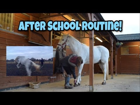 After School Riding Routine // Lunging