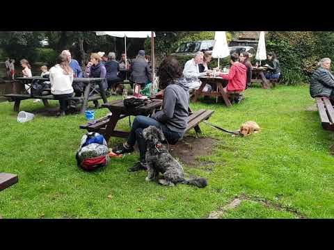 Bob - Pumi x - 4 Weeks Residential Dog Training