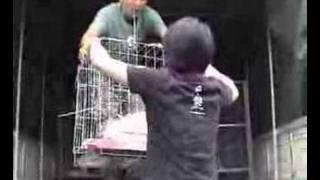 Animals Asia - Dog rescue in earthquake zone