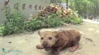 شکنجه حیوانات در سیرک