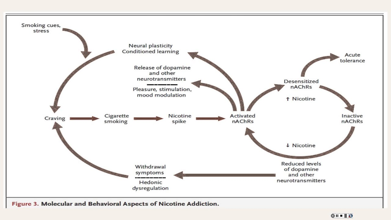 Understanding Nicotine Addiction
