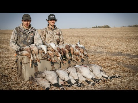 Duck Hunting 2020 | Field Hunt (MIXED FEED!)