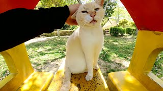 小さな家で一休みをしていたら可愛い猫茶シロ猫が遊びに来た