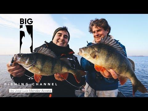 Dicke Barsche mit Uli Beyer & Big L / Angeln auf Hecht und Zander / Raubfische fangen im flachen