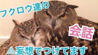 フクロウ達がなんか喋ってる.... Owls are talking something ....