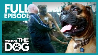 The Bouncing Boxer: Zulu | Full Episode | It's Me or the Dog