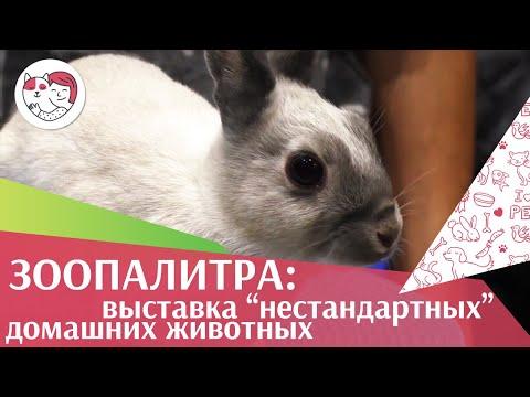 Международная выставка животных «ЗооПалитра» на ilikepet