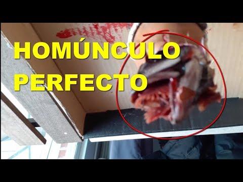 HOMUNCULO PERFECTO ¿ REAL ?