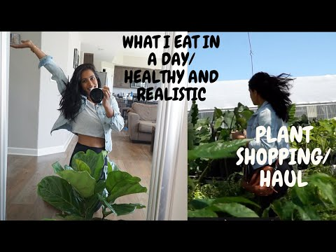 what-i-eat-in-a-day|-healthy-and-realistic-+-plants-shopping/haul
