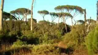 castel fusano , la foresta morta