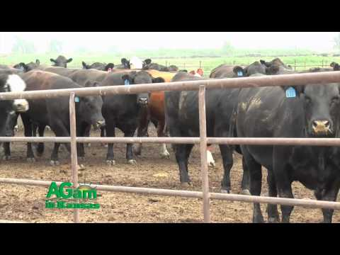 That's My Farm - Tiffany Cattle Company - May 1, 2015