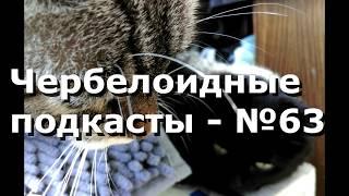 Чербелоидный подкаст #63 - Чудовищная кошачья логика