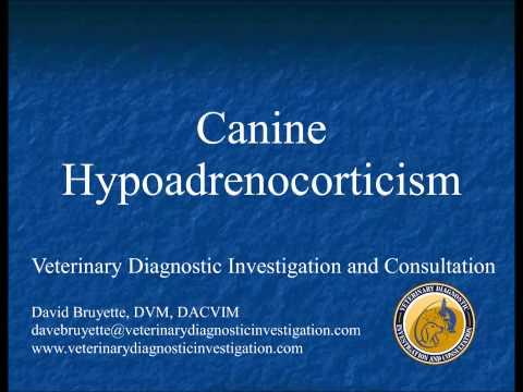 Canine Hypoadrenocorticism