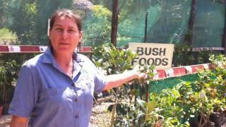 Shop Tour Daleys Fruit Tree Nursery Kyogle NSW Australia DaleysFruit.com.au