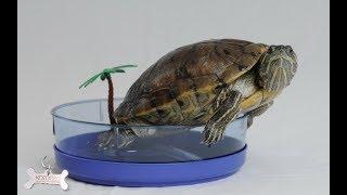 Моя красноухая черепаха. Уход и содержание. 1 ЧАСТЬ!