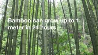 12 Amazing Facts About Bamboo