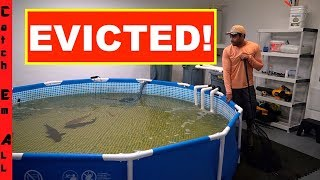 KICKED OUT of HOME for Having FISH, INDOOR AQUARIUM, TANKS, and POOL POND! **Losing Everything**