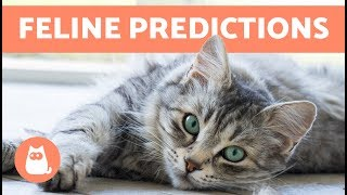 7 Things Cats Can Predict