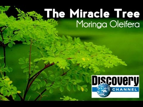 Discovery Channel - Moringa Oleifera
