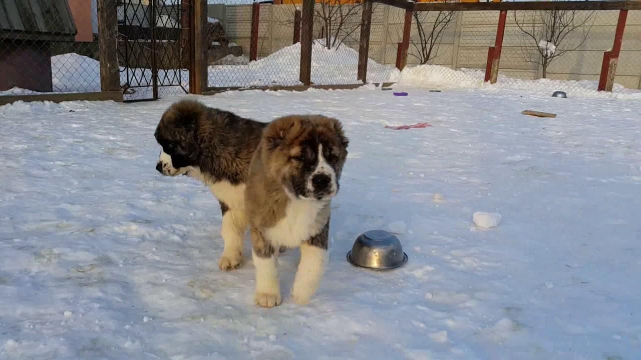 Товары для собак и для кошек в екатеринбурге по доступной цене. Купить необходимые зоотовары в нашем интернет-магазине зоотоваров очень.