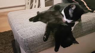 кот и катенок katze