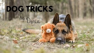 Dog tricks / German shepherd Denis 2k16