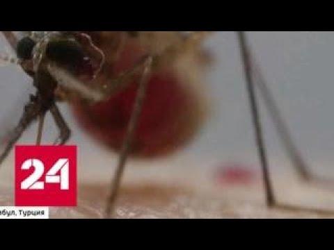 """Малярия, денге, желтая лихорадка: как не привезти из отпуска смертельный """"багаж"""" - Россия 24"""