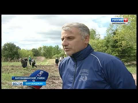 Представители ОНФ и биробиджанского лесхоза посадили больше двух тысяч деревьев