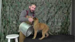 Malinois Puppy Training Lesson Four